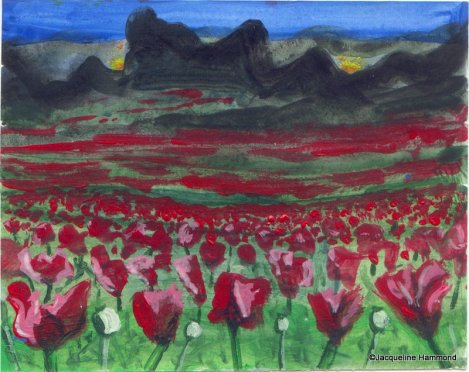 Sketch for poppy painting by Jacqueline Hammond